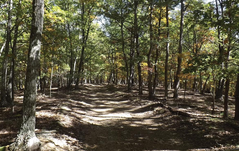 deer run road  mineral county  wv